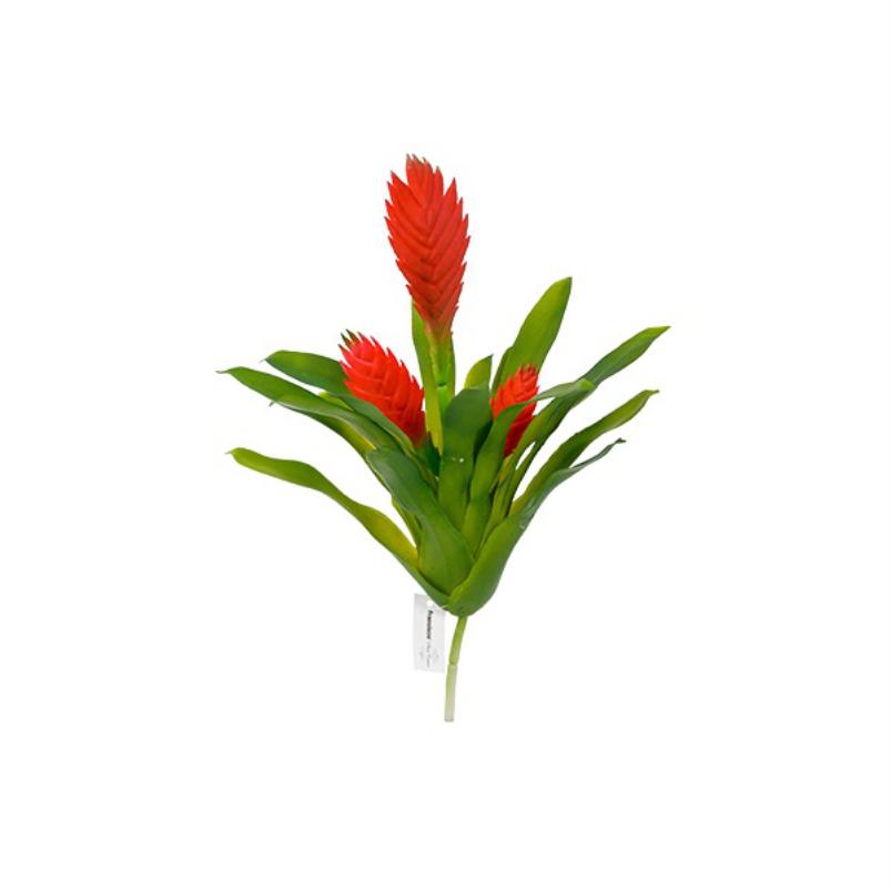 Bromeliad Vriesia 35cm