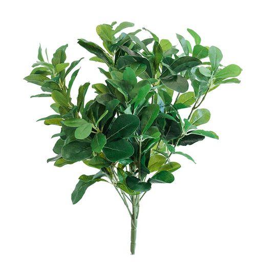 Schefflera Bush 40cm