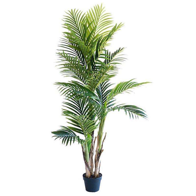areca palm 150cm