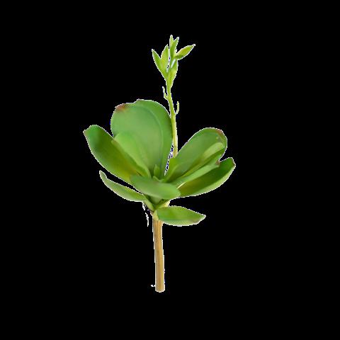 paddle plant 20