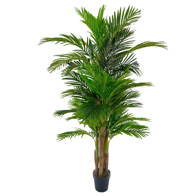 areca palm 189cm